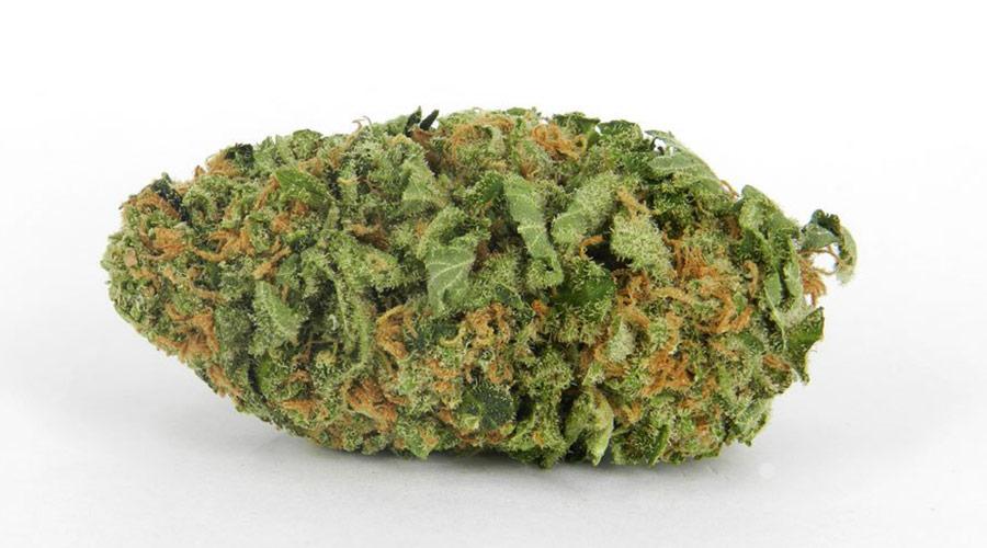 Northern Lights Cannabis Strain