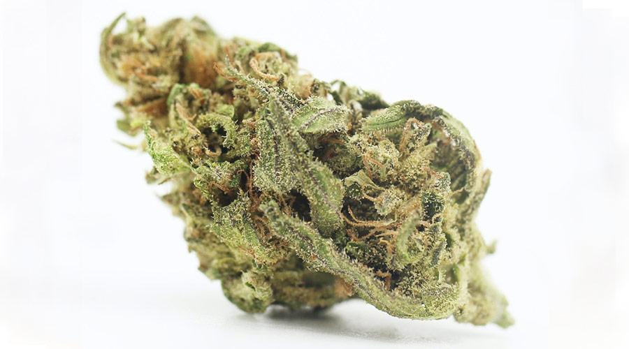 Original Haze Cannabis Strain