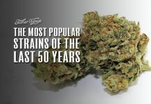 most popular strains last 50 years