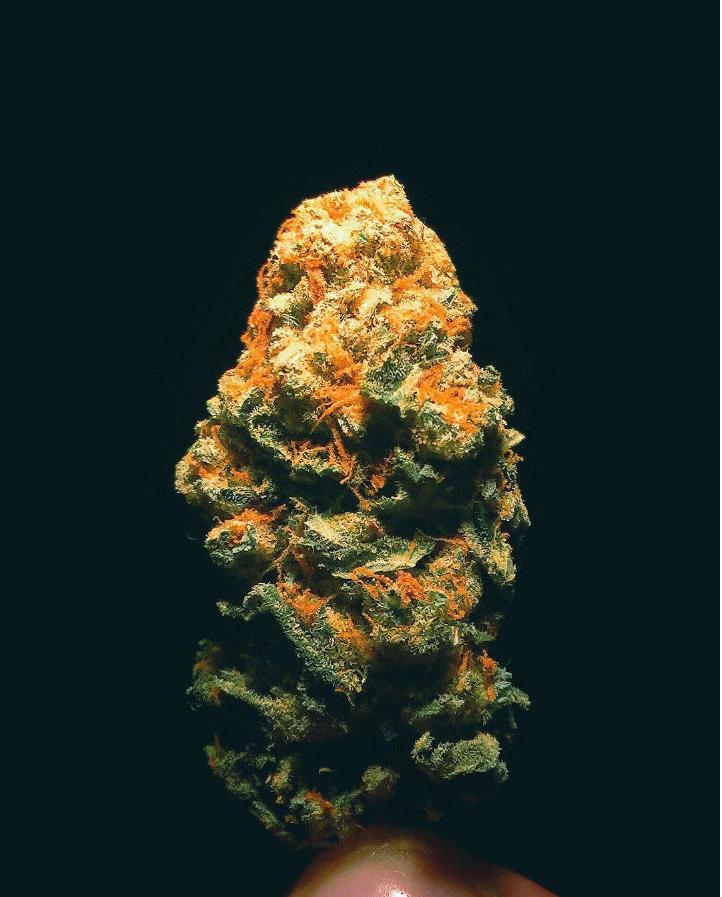 Is Marijuana Stronger These Days?