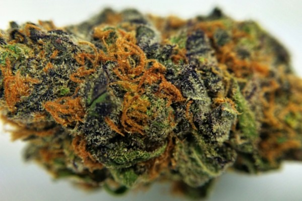 Grandaddy Purple Best Indicas