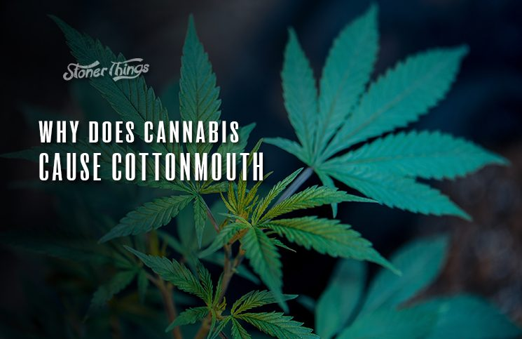 cannabis cottonmouth dry throat