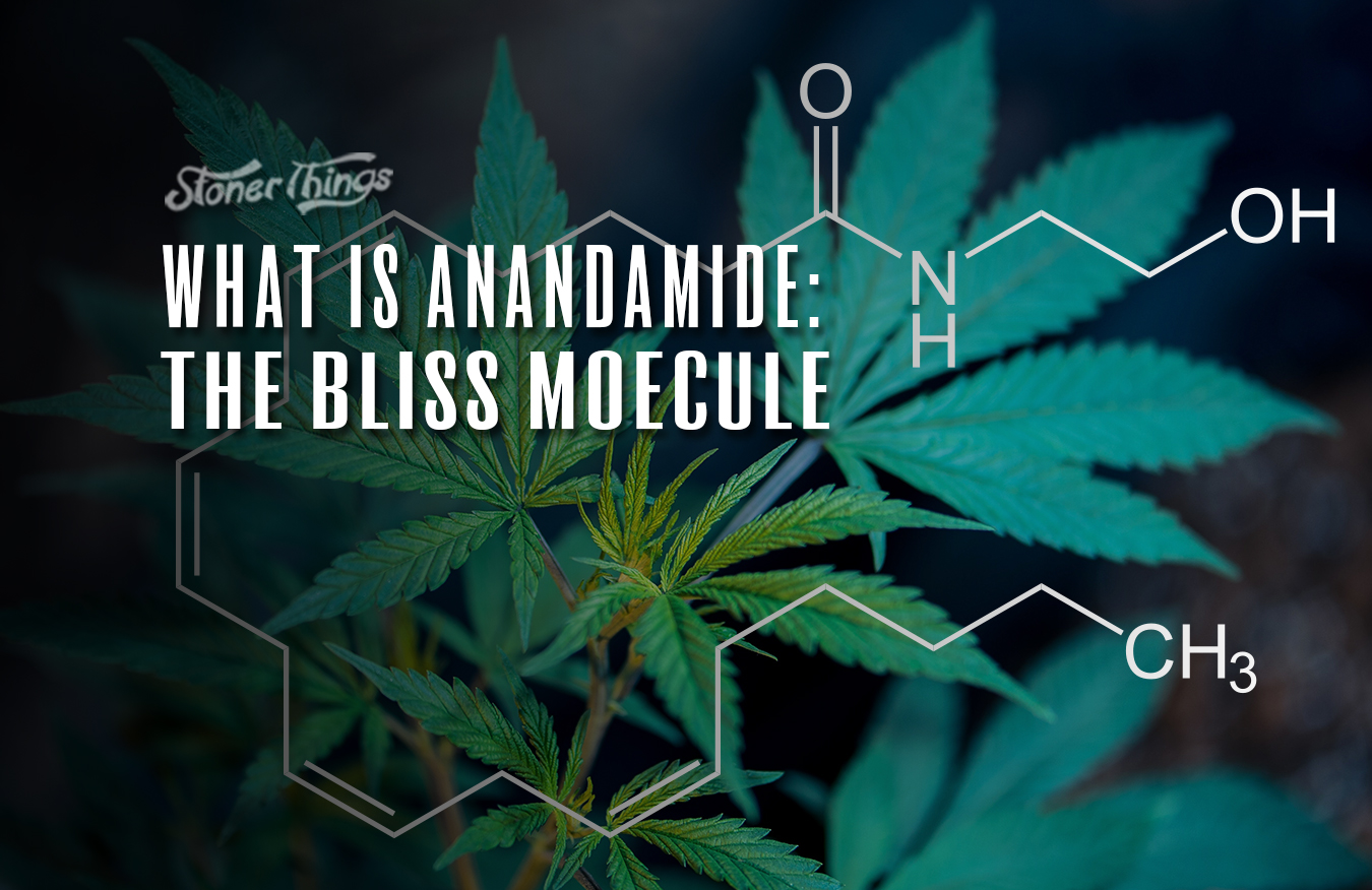 anandamide-bliss-molecule