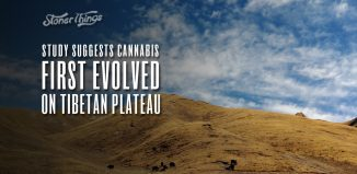 cannabis first evolved tibetan plateau