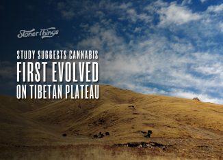 cannabis first evolved tibetan plateau
