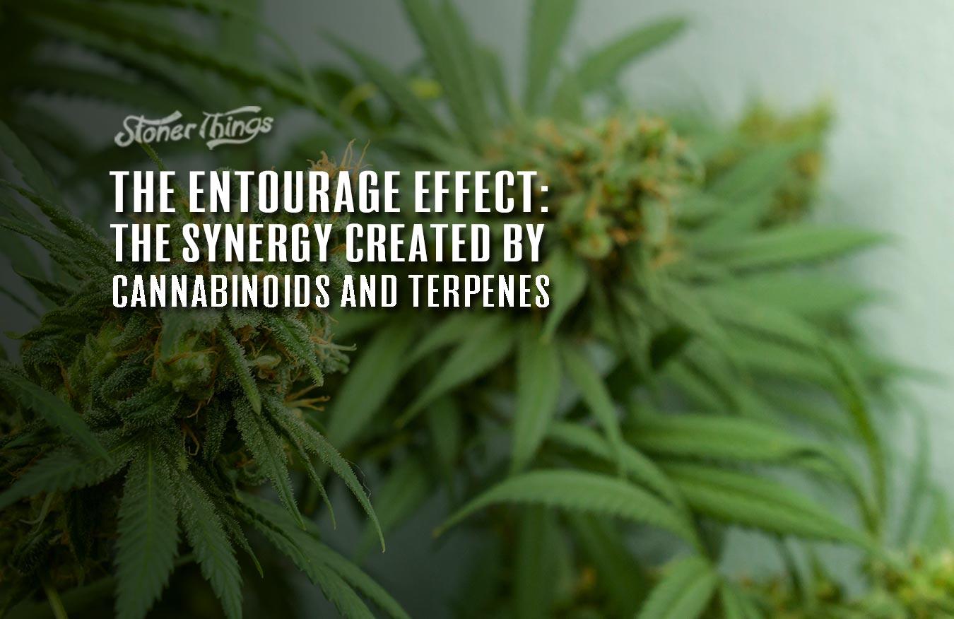 entourage effect cannabis