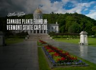 cannabis plants found in vermont state capitol