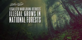 legal marijuana reduces illegal grows national forests