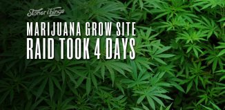 marijuana grow site raid california