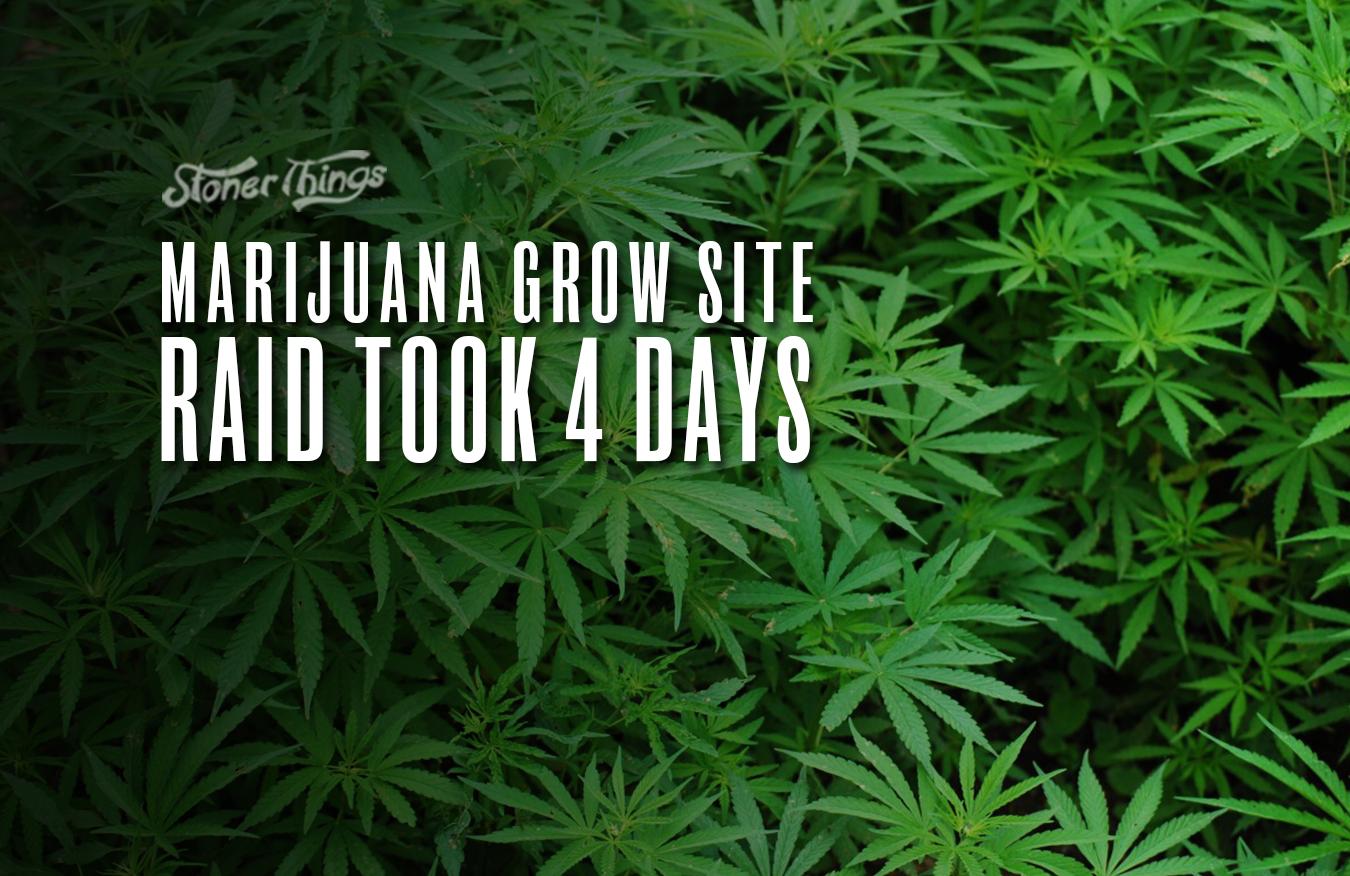marijuana grow site raid california