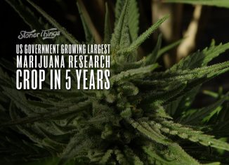 us government growing largest marijuana crop