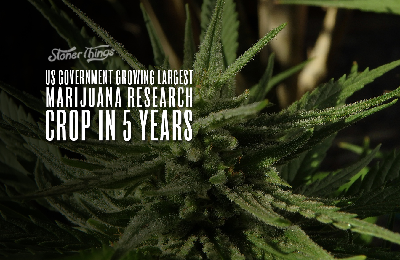 us government growing largest marijuana crop