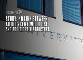 no link between adolescent cannabis use adult brain structure