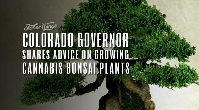 cannabis bonsai plants