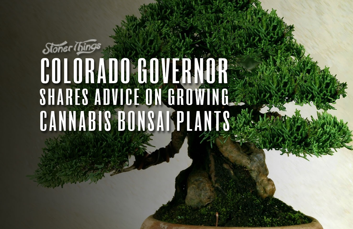 cannabis bonsai plants