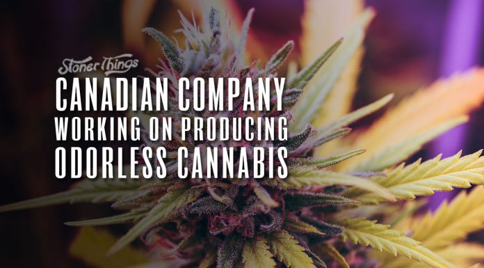 odorless cannabis canadian company