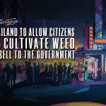 thailand allow marijuana cultivation sell to government