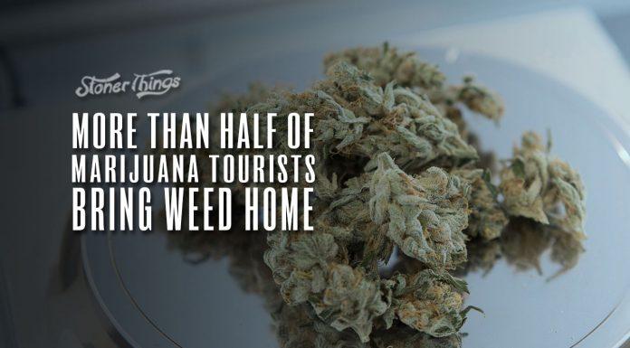 more than half marijuana tourists bring weed home