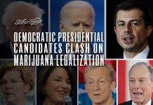 democratic presidential candidates clash marijuana legalization