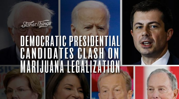 democratic presidential candidates clash marijuana legalization