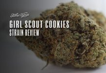 girls scout cookies strain review