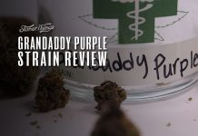 grandaddy purple strain review
