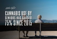 cannabis use increase seniors
