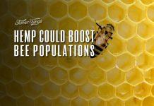 hemp boost bee populations