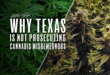 why texas not prosecuting marijuana misdemeanors