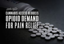 cannabis access reduces opioid demand pain patients