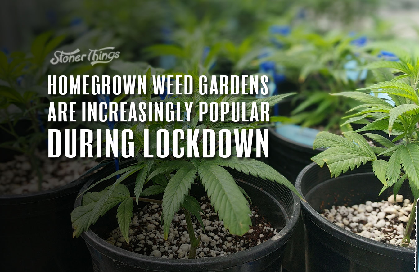 homegrow weed gardens popular lockdown