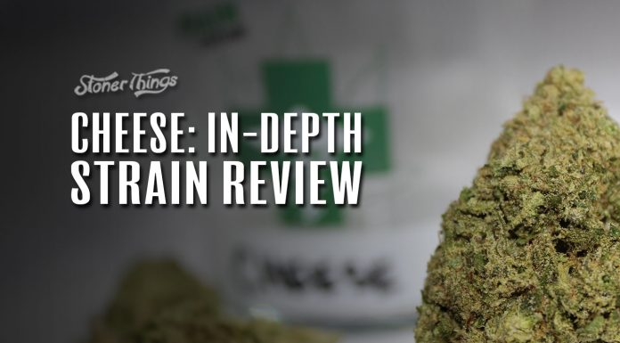 cheese strain review detailed