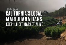 california local marijuana bans keep illicit market alive