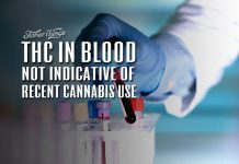 THC in blood not indicative of recent cannabis use