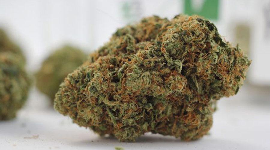 Tahoe Weed Strain