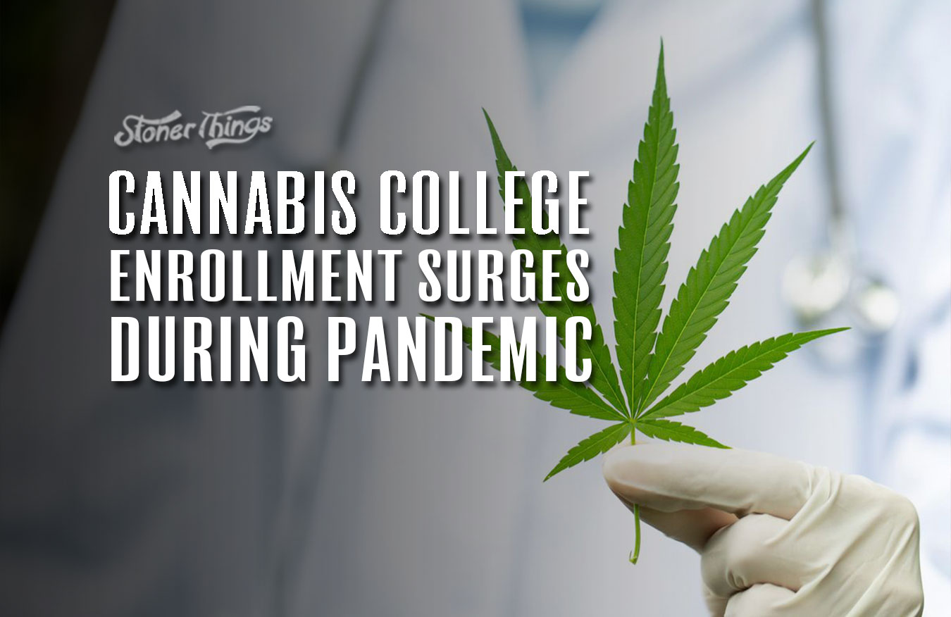 cannabis college enrollment surges pandemic