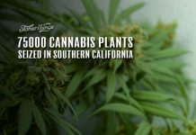 cannabis plants seized california