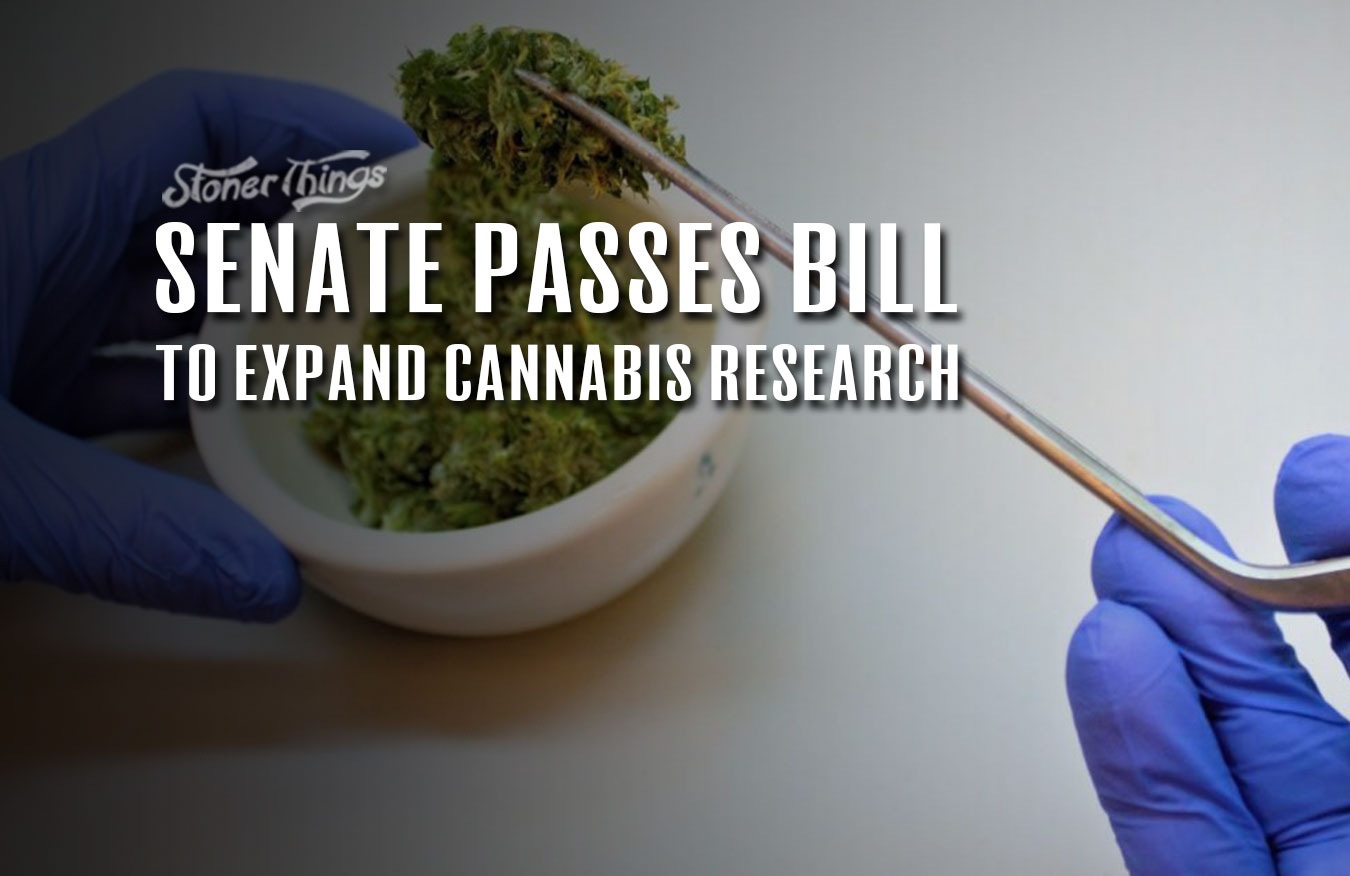 senate passes bill expand marijuana research
