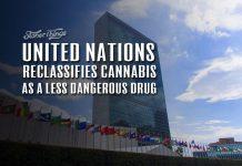 united nations reclassifies cannabis as less harmful drug
