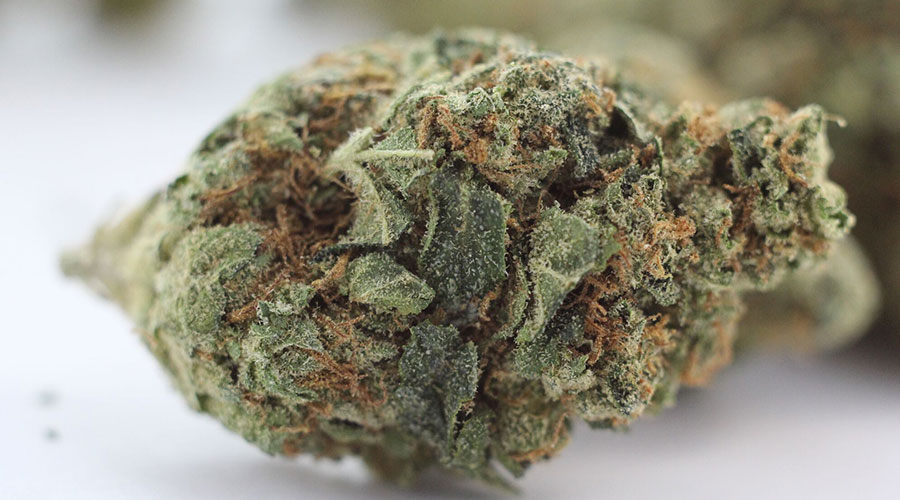 Herojuana marijuana strain
