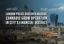 cannabis grow operation discovered london city