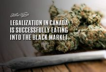 Legalization in Canada Is Successfully Eating Away at the Black Market
