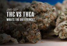 THC vs THCa Cannabinoids