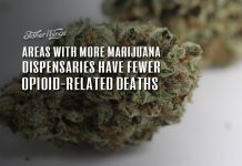 areas with more marijuana dispensaries have fewer opioid related deaths