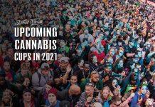 cannabis cups 2021