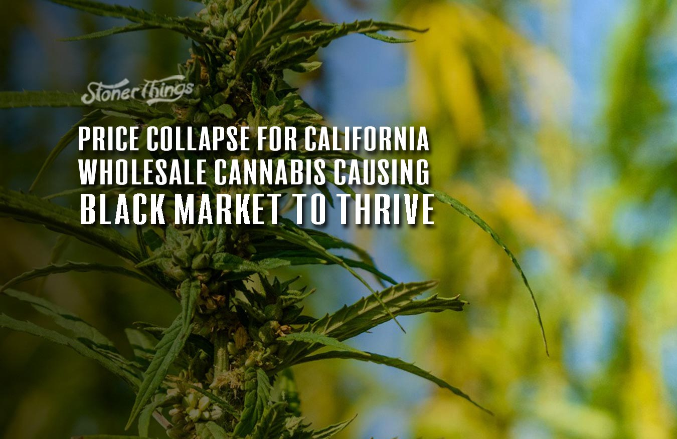 price collapsose california wholesale cannabis
